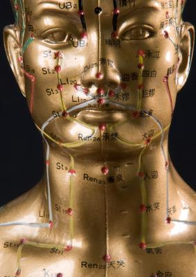 acupuncture-model